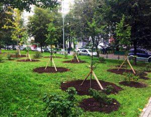 Озеленение по программме реновации в Москве