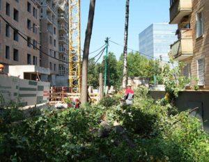 Удаление деревьев в Москве