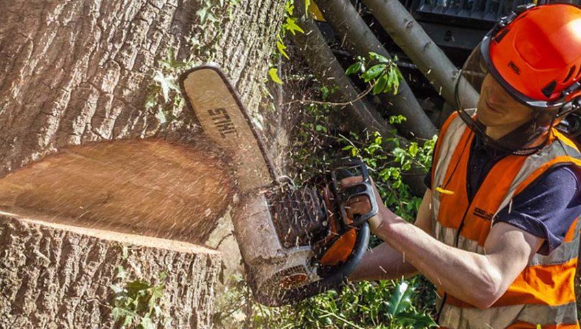 Спилить дерево на даче или участке
