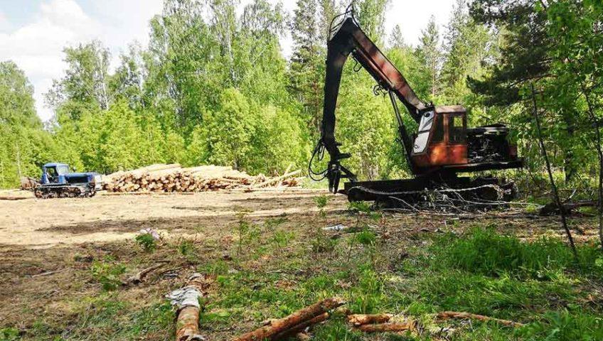 вырубка леса под строительство