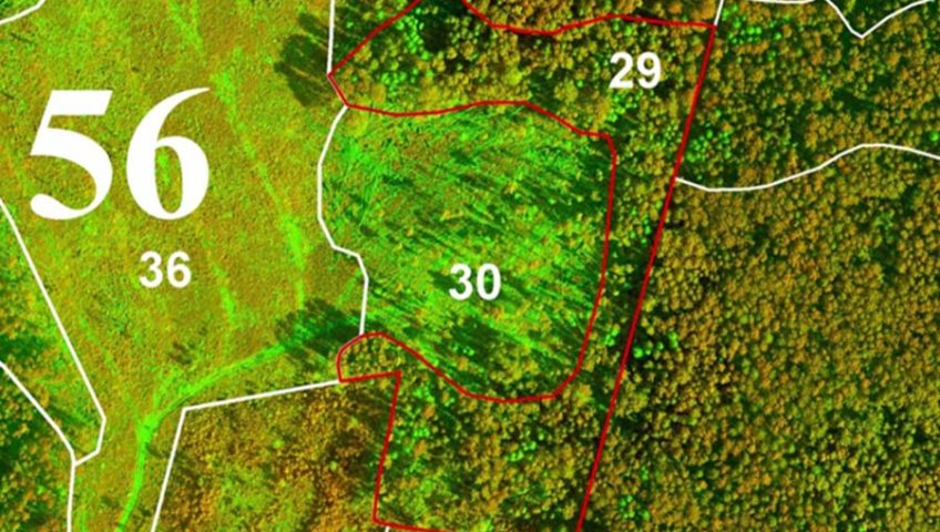 Разработка проекта лесоустройства