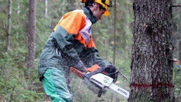 валка деревьев стоимость работ