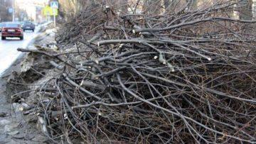 Утилизация деревьев и веток