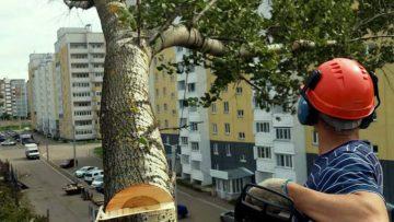 Валка деревьев в городских условиях - расценка