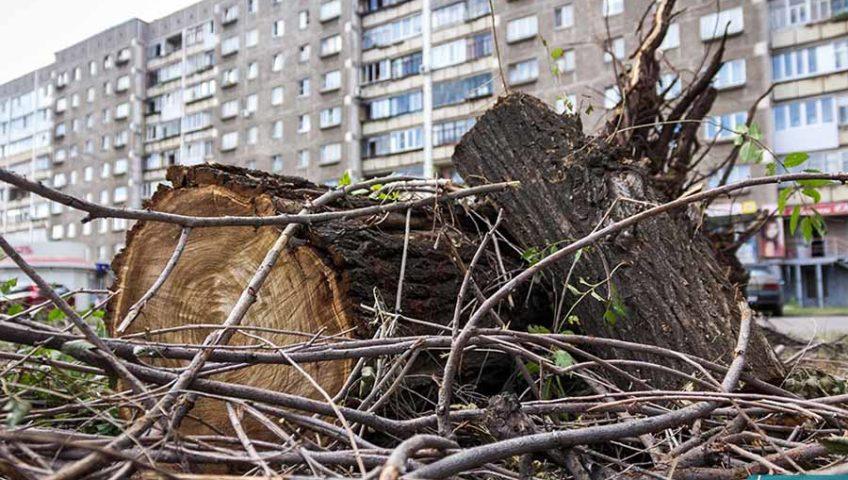 Услуги по вырубке деревьев