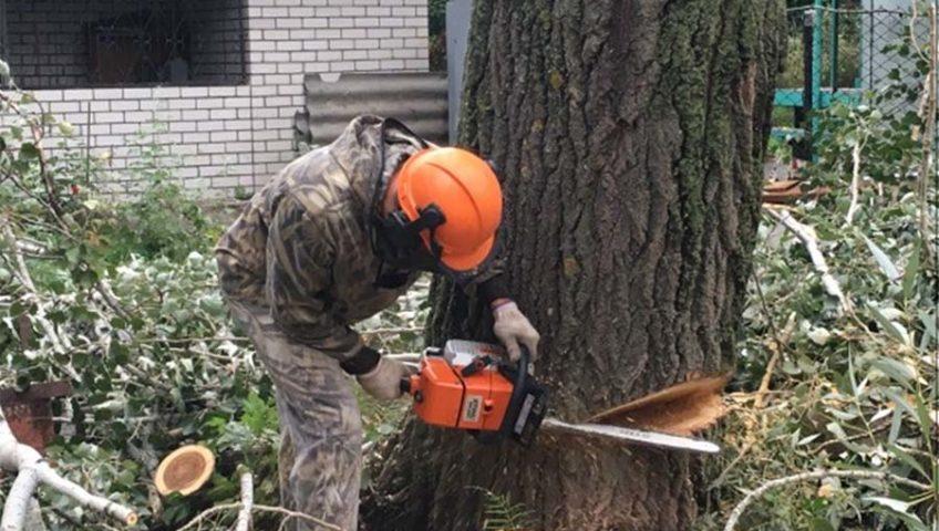 вырубка деревьев в москве