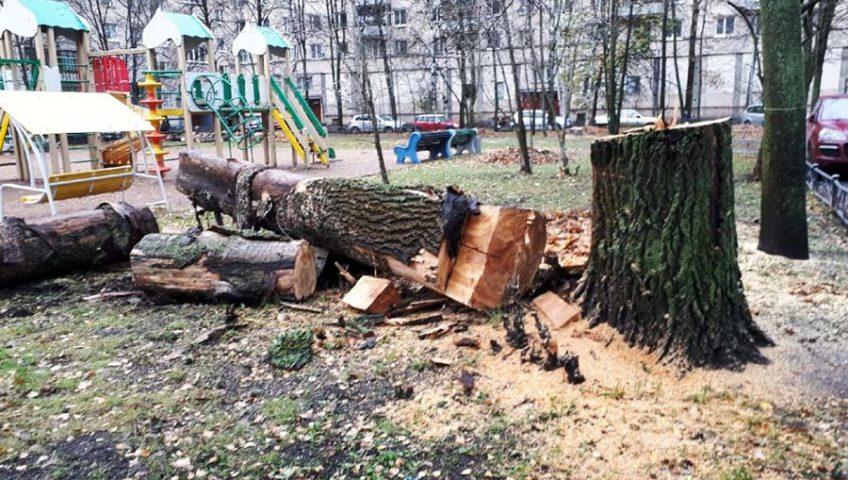 Вырубка деревьев черте города