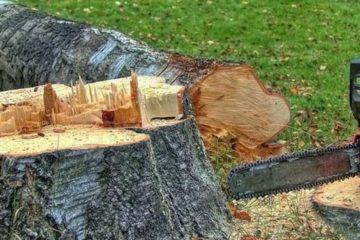 Вырубка, удаление, валка, спил деревьев