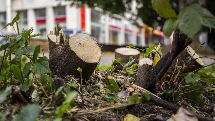 Профессиональная вырубка деревьев